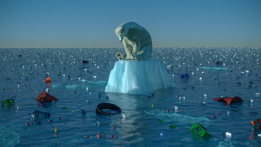 Climate Change Effects On Animals